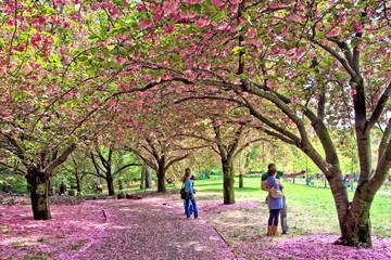 pairs in beautiful cherry tree garden