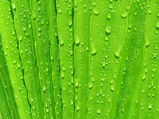 water drops on palm tree leaf
