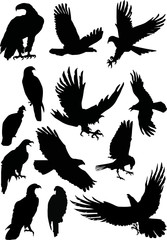thirteen eagle silhouettes