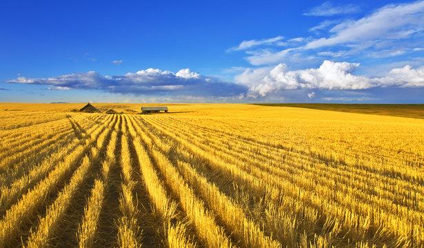 Solar midday on fields of Montana