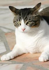 gros chat effrayé 2