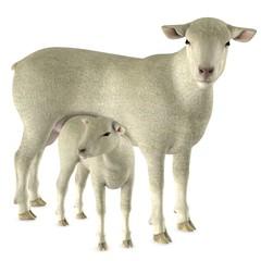 Lamm mit Mama