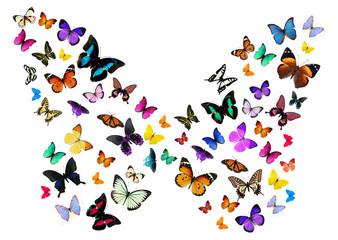 Numerous butterflies