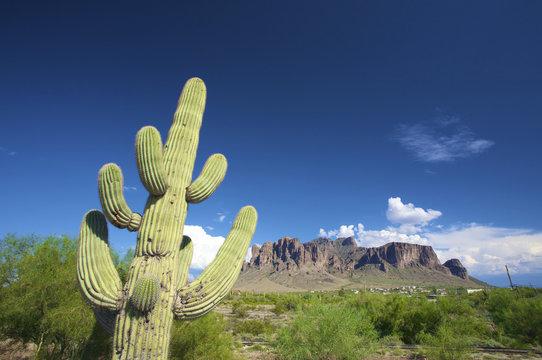a green cactus against a blue sky