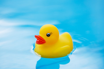 toy duck in pool