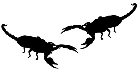 Two Scorpions