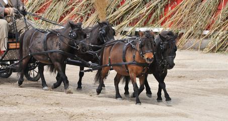attelage de chevaux miniatures