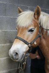 Brossage du cheval