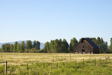 Country Barn in Field
