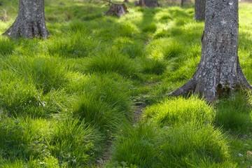 trawa w lesie