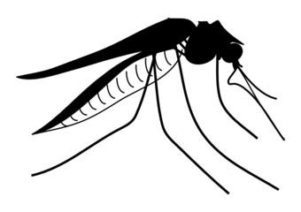 Mücke - Insekt