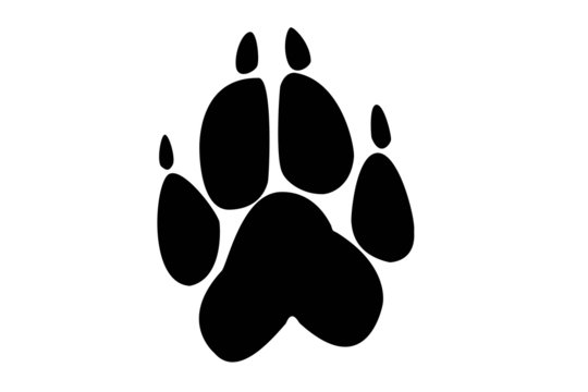 paw print of wolf