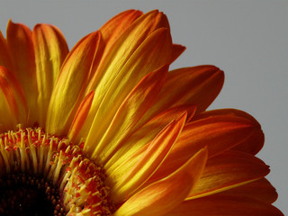 Blütenblätter III