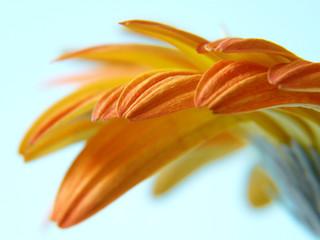 Blütenblätter IV