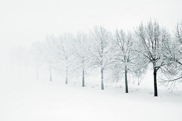 Baumreihe im Winter, Nebel