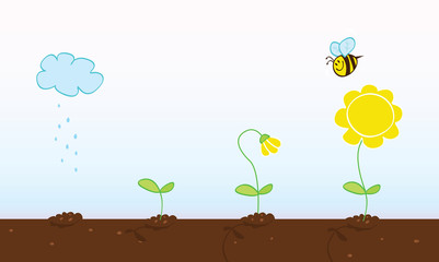 Flower growing stages. Process of growing plant in four stages.