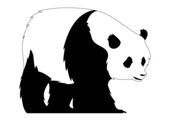 Panda - Bär