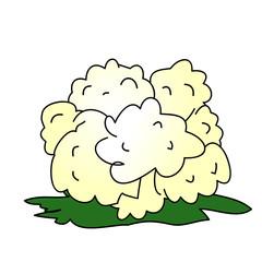 Childish Illustration Isolated Vector Cauliflower