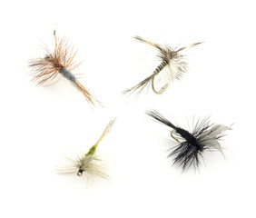 Four dry trout fishing flies