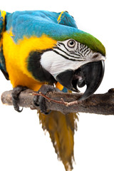 Deurstickers Vogel Curiosity