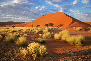 Zelfklevend Fotobehang Diepbruine Desert landscape, Sossusvlei, Namibia, southern Africa