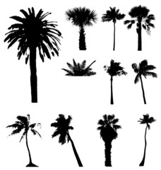 Collection of vector palm trees detailed silhouettes.