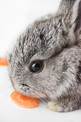 Little rabbit eating a carrot, isolated on white
