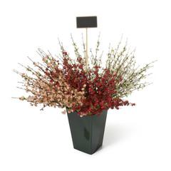 Blumenstrauch
