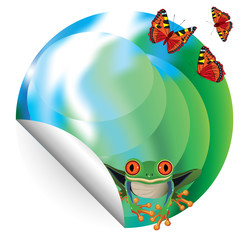 Nature - red-eyed frog and butterflies