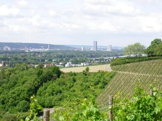 Weinberge bei Bonn