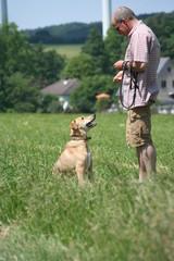 Hundeschule 4