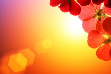 Wall Mural - Red flowers over sunshine background
