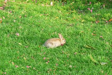 Rabbit In Park