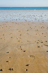 Low tide. Footprints and lugworm casts on a beach