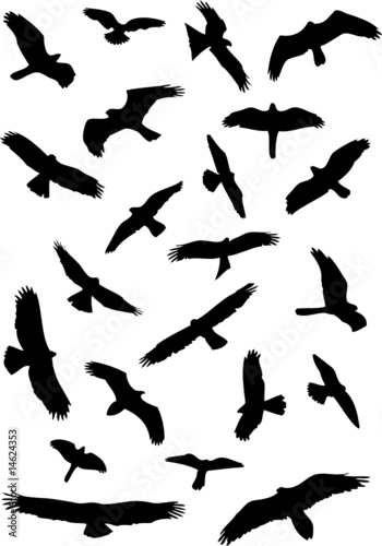 Bird canadian canadian goose  mon bird flying goose migration icon further Photoshop Premium Wing Brushes as well  moreover Heron Bird Vector 3579480 additionally 40 Fairy Tattoos Ideas For Girls. on flying bird outline