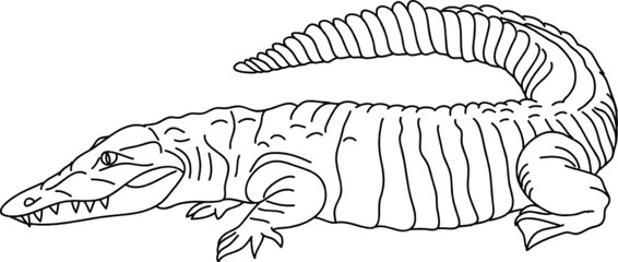 vector -  contour crocodille isolated on background