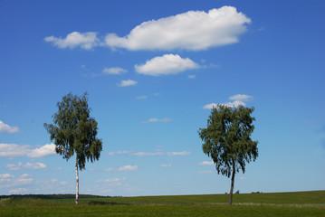 Wall Mural - Birken am Wegrand vor blauem Himmel