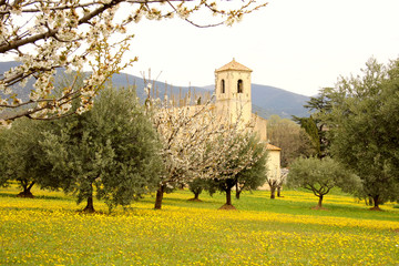 Old church  in olive grove, provence, france