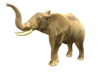 Scenting elephant