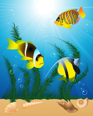 Exotic fish under water