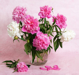 Beautiful peonies in a glass vase