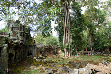 Fig Tree, Ta Promh, Cambodia