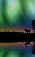 Aurora boreale riflessa con cervo