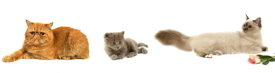 illustrations chats couchés
