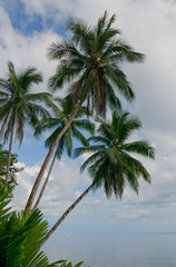 coconut palms over blue sky background
