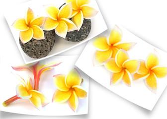 photos de fleurs jaunes de frangipanier