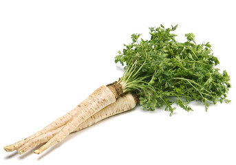 Parsley with root