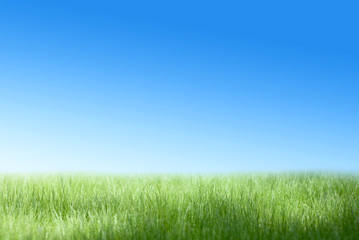 Green field and the blue sky
