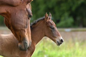 Eine Stute stützt ihr neugeborenes Fohlen