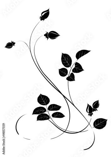 Dekoratives Rosenblüten Ornament Schwarz Weiss Stockfotos Und